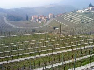 unendliche Weinberge im Valpolicella